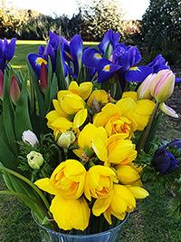 Flower Assortment - 10 bunches
