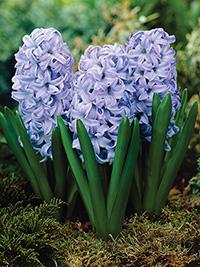 Hyacinth Sky Jacket