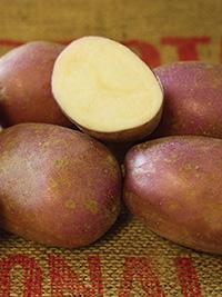 Early-Main Potato Heather