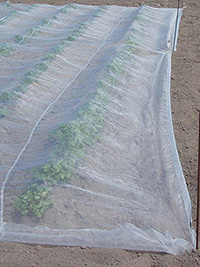Insect proof netting for potatoes