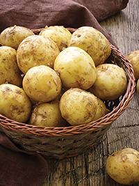 Early Potato Swift